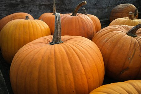 pumpkins for web